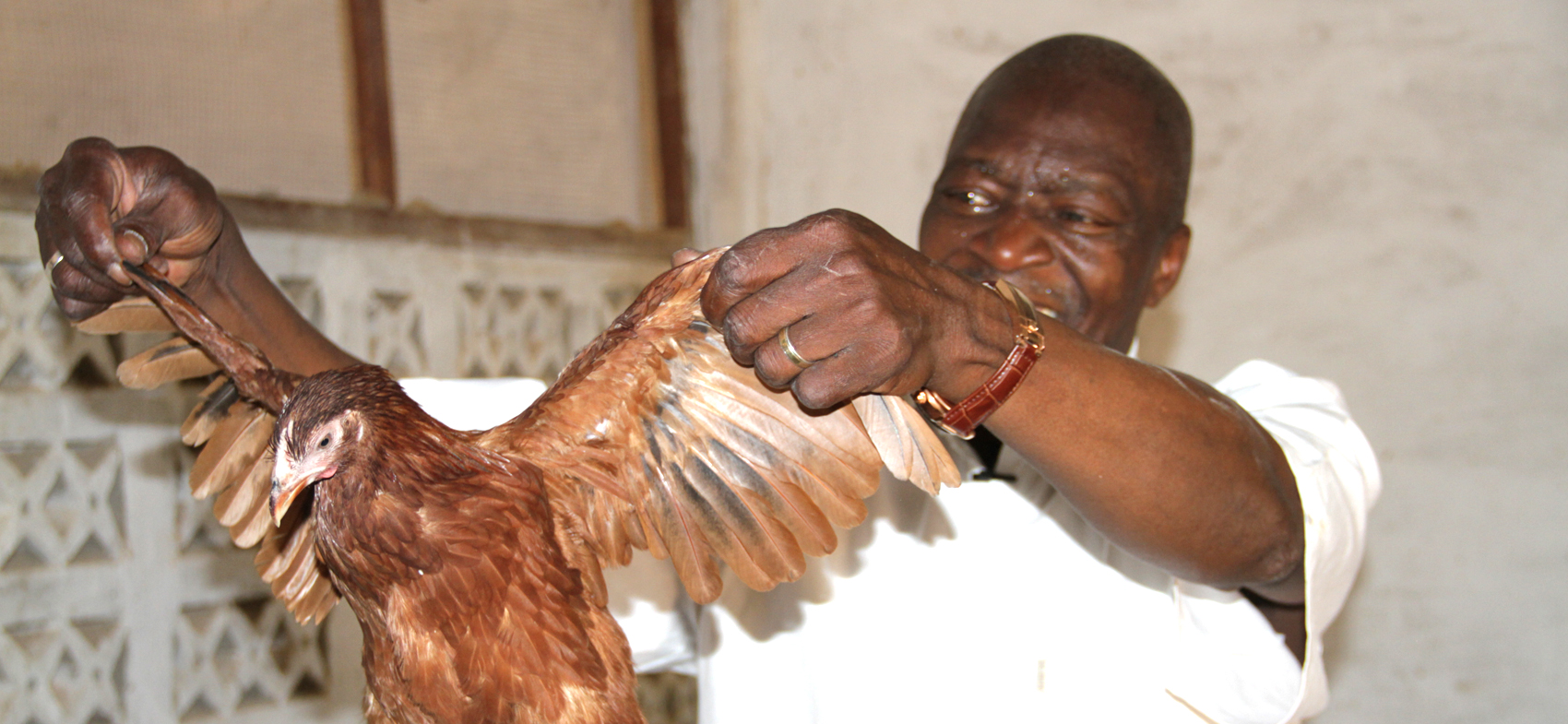 Retired commissioner of police Yaya Sangare in his poultry farm on the outskirts of Bamako. Photo credit/CORAF