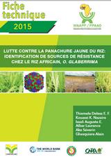 Lutte contre la panachure jaune du riz- Identification de sources de résistance chez le riz africain